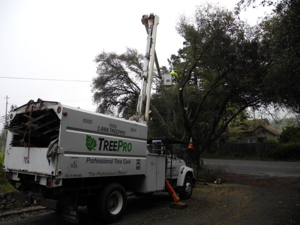 rohnert park tree trimming